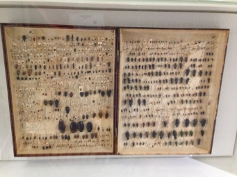 Darwin's beetle collection